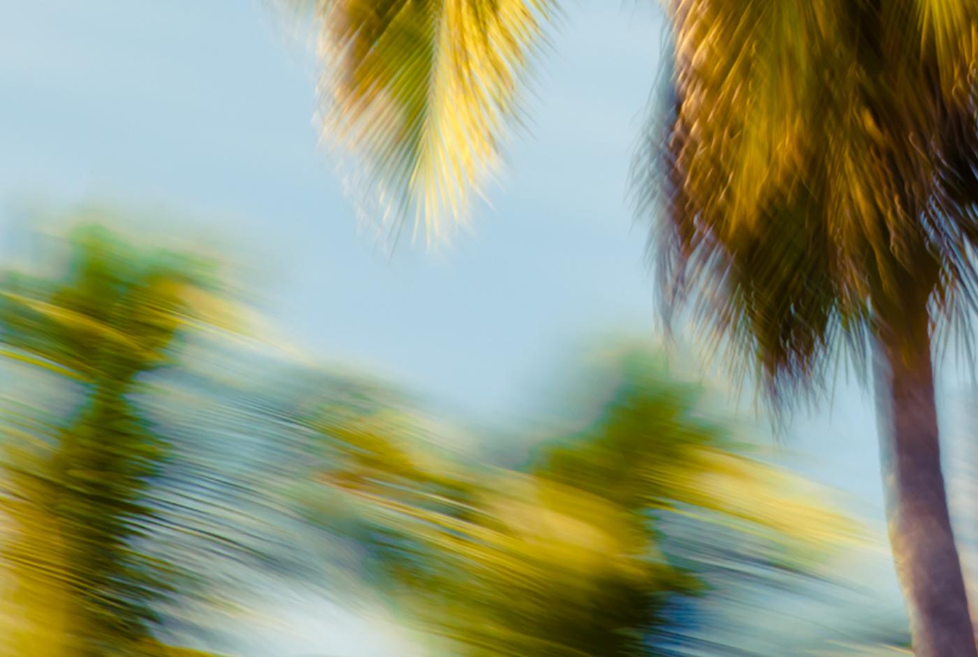 Palm Glimpse · Flavor Paper